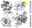 Engraved hand drawn illustrations of ornate peonies. Flower buds, leaves and stems can be easily separated and removed - stock vector