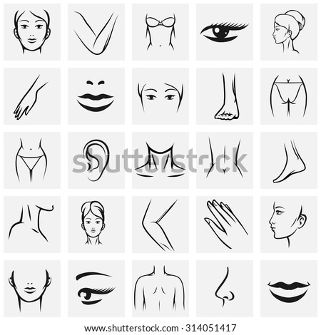 Female Body Parts Waist Attractive Woman Stock Vector 337189691 ...