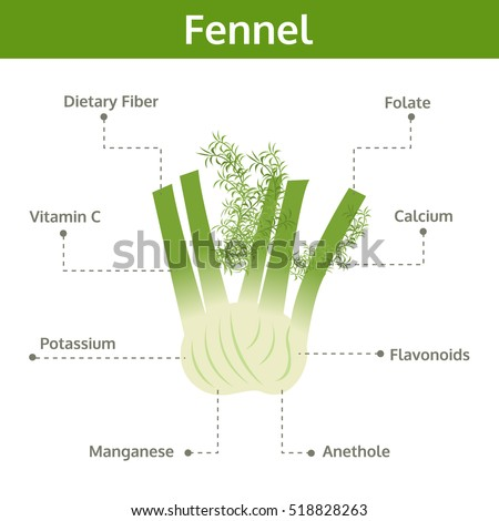 Fennel plant diagram images galleries for Formation of soil diagram