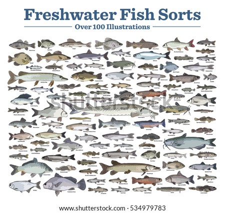 Fish sorts types seawater freshwater fish stock vector for Names of fish