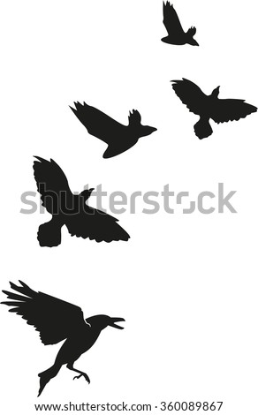 Flock of crows ravens