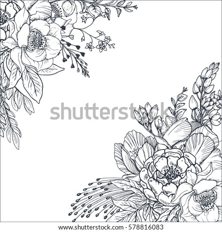 Collection Hand Drawn Flowers Plants Monochrome Stock ...