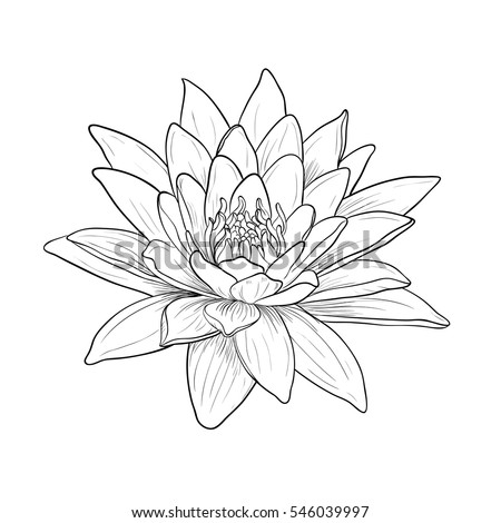 Floral Water Lily for design, Vector illustration