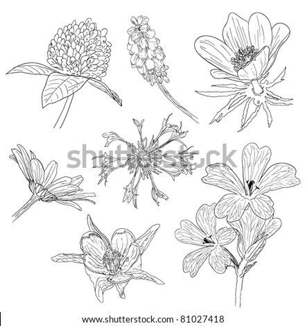 flower sketches collection