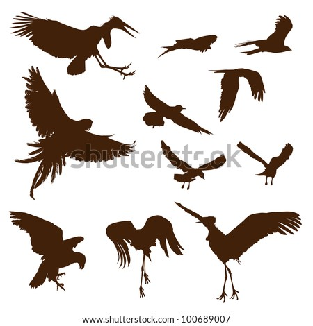 Flying birds silhouettes