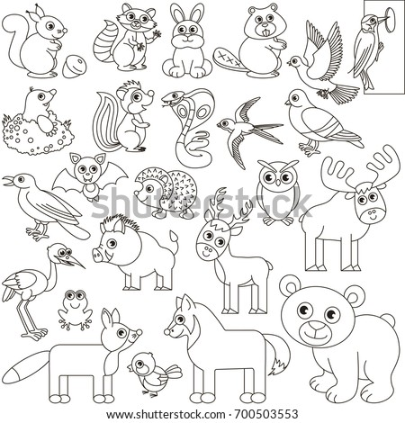 Forest Animals Elements Set Collection Of Coloring Book Template The Group Outline Digital
