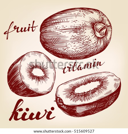 fruit kiwi set hand drawn vector llustration realistic sketch