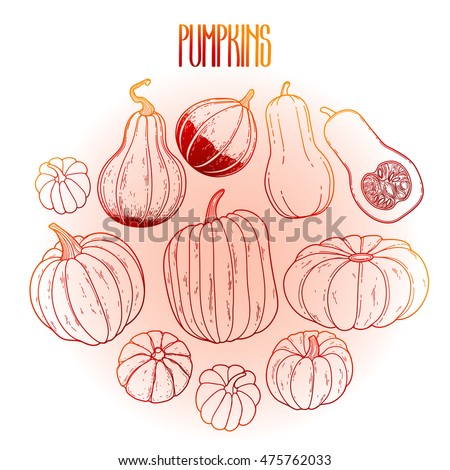 Graphic collection of pumpkins drawn in line art style. Vector elements for thanks giving day design