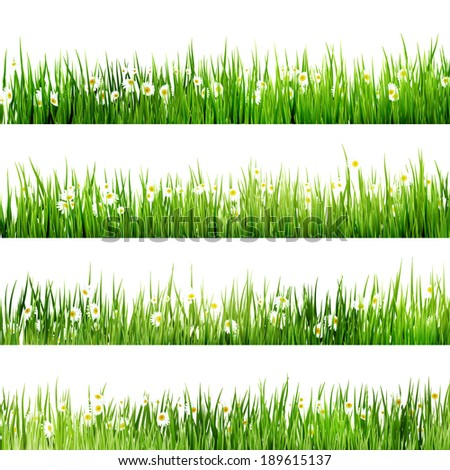 Green grass and chamomiles in the nature. And also includes EPS 10 vector