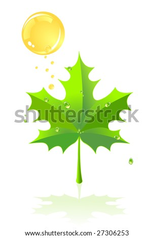 Green leaf of a maple and rain against the sun. A vector illustration