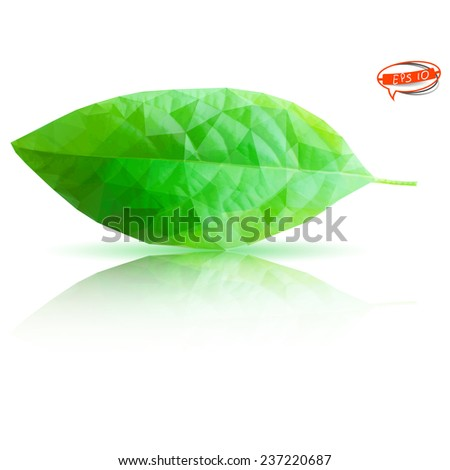 Green leaf with reflection