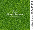 Green leaves texture. Vector illustration. - stock