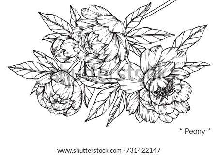 how to draw a japanese peony