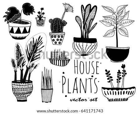 house plants drawing. hand drawn houseplants graphic vector set house plants drawing