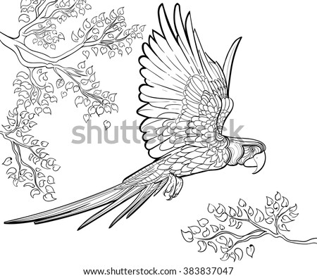 Hand drawn ink pattern. Coloring book Coloring for adult parrot ara