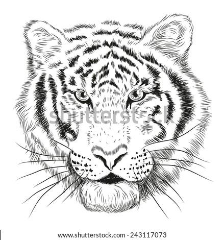 Black White Vector Line Drawing Cheetahs Stock Vector