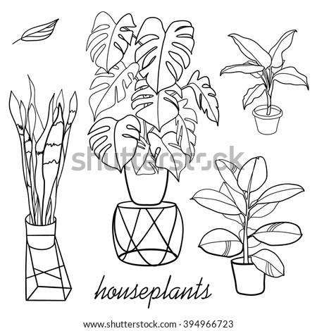 house plants drawing. house plants hand drawn illustration drawing l