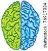 human color brain isolated - illustration - stock