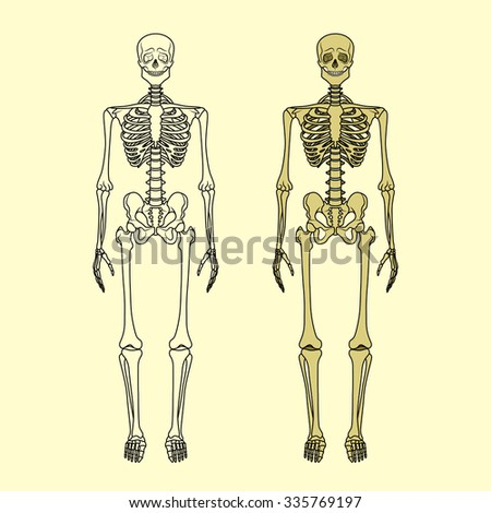 human skeleton vector stock vector 50503597 - shutterstock, Skeleton
