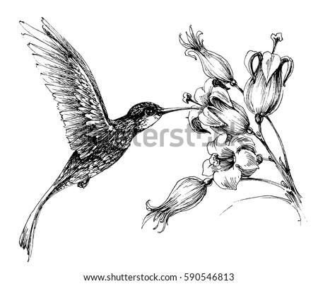 Flying Birds Background Pencil Drawing Vector Stock Vector