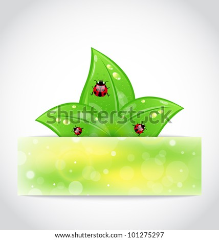 Illustration eco leaves with ladybugs sticking out of the cut paper - vector