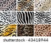 illustration of animal print background set - stock vector