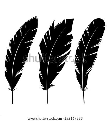 Illustration set feathers isolated on white background - vector