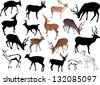illustration with deer collection isolated on white background - stock vector