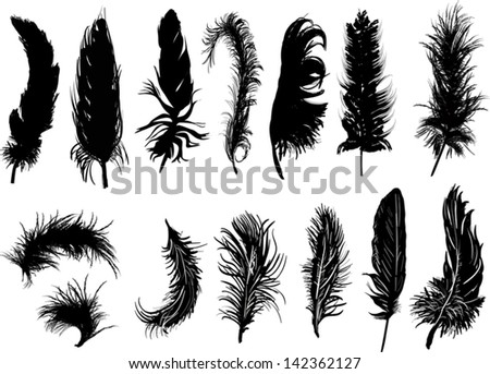 illustration with fourteen black feathers isolated on white background