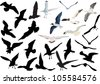 illustration with gulls isolated on white background - stock vector