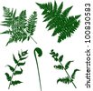 illustration with set of fern silhouettes isolated on white - stock vector