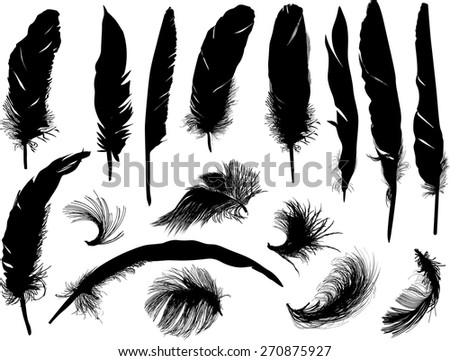 illustration with sixteen black feathers isolated on white background