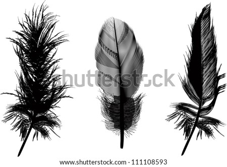 illustration with three black feathers isolated on white background