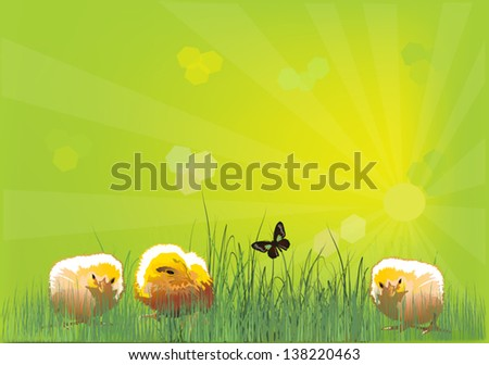 illustration with three chickens in green grass
