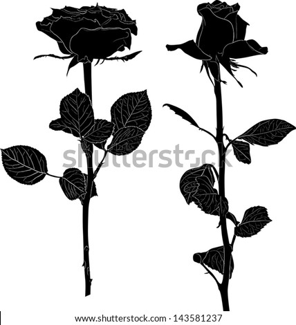Two black rose flowers isolated on white background stock vector