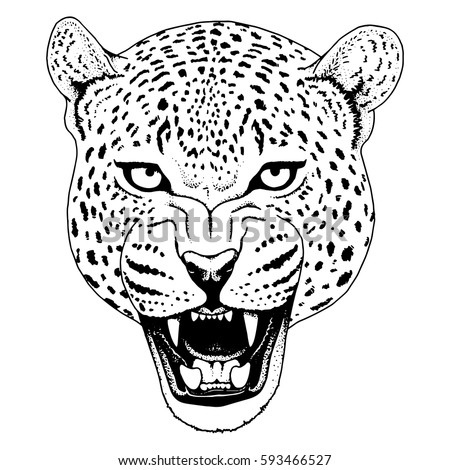 jaguar face illustration - photo #5