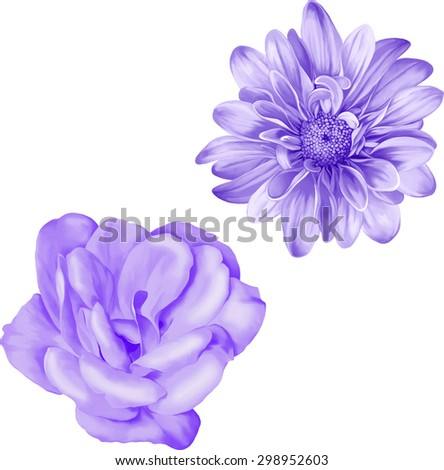 Light purple camellia rose flower. Beautiful colorful dahlia flower isolated on white background. Vector illustration