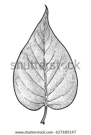 How To Draw A Realistic Leaf