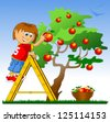 little boy collects red apples (vector illustration) - stock vector