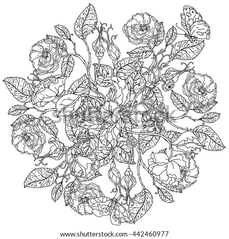 Uncolored Colouring Book Style Luxury Roses Stock Vector