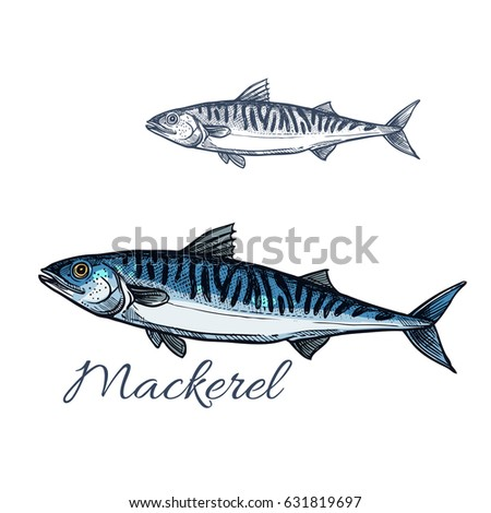 Black shark tattoo design isolated on stock vector for White river fish market menu