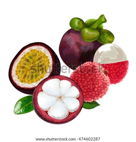 lychee lychee vector illustration lychee fruit stock vector, Beautiful flower