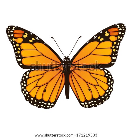 Monarch butterfly. Hand drawn vector illustration