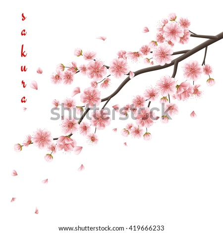 Nature background with blossom branch of pink sakura flowers. Template isolated on white background. EPS 10 vector file included