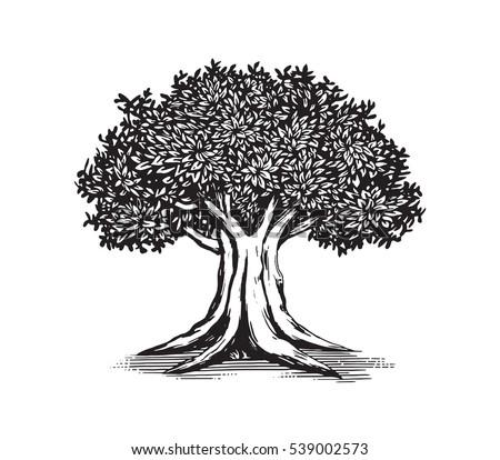 oak tree vector logo illustration design stock vector 539002573