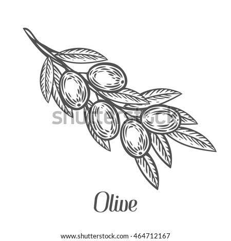 Set Nature Elements Herbal Illustrations Sketch 432635425