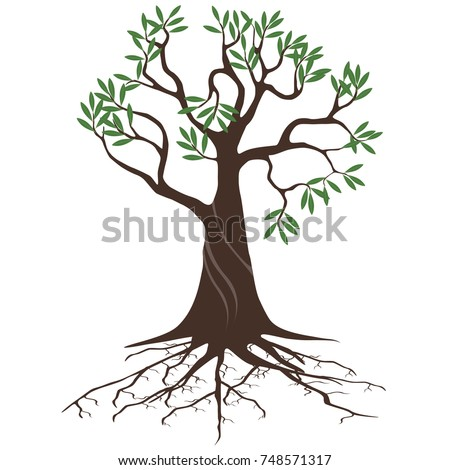 olive tree with roots on a white background