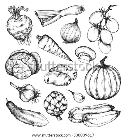Organic natural fresh vegetables set. Artichoke, cucumber, pumpkin, zucchini, celery, onion, garlic, carrot, potato, cabbage, tomato, leek, mushroom. Collection of hand drawn design elements. Set 1