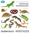 pet reptiles and amphibians...