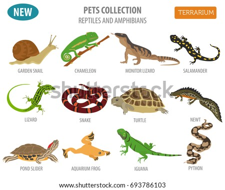 Pet Reptiles Amphibians Icon Set Flat Stock Vector ...